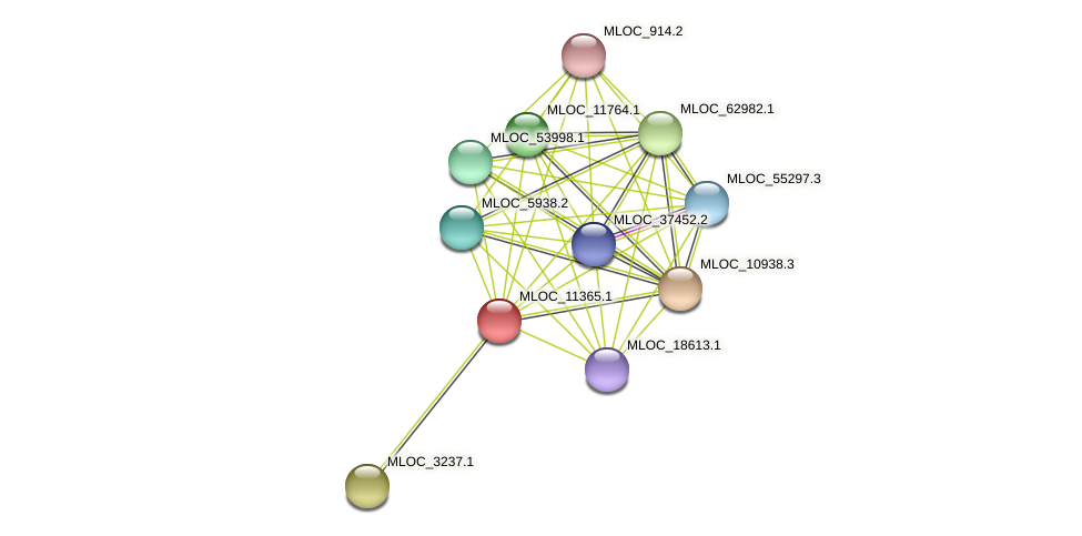 MLOC_11365.1 protein (Hordeum vulgare) - STRING interaction network