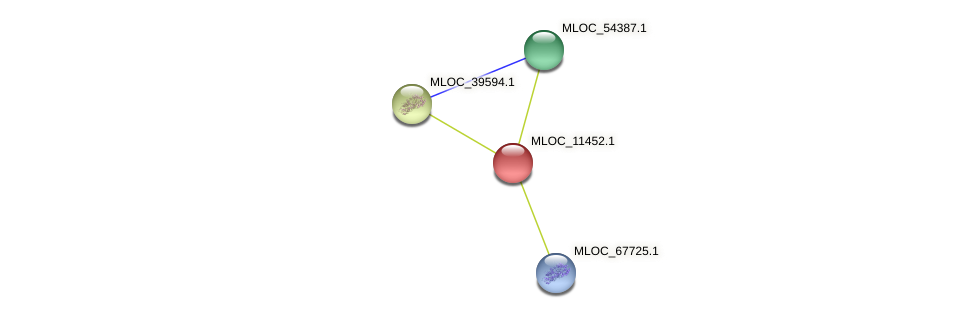 MLOC_11452.1 protein (Hordeum vulgare) - STRING interaction network