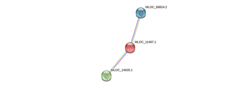 MLOC_11487.1 protein (Hordeum vulgare) - STRING interaction network