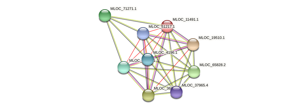 MLOC_11491.1 protein (Hordeum vulgare) - STRING interaction network