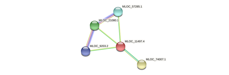 MLOC_11497.4 protein (Hordeum vulgare) - STRING interaction network