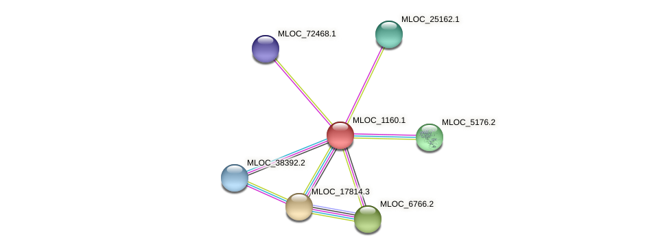 MLOC_1160.1 protein (Hordeum vulgare) - STRING interaction network