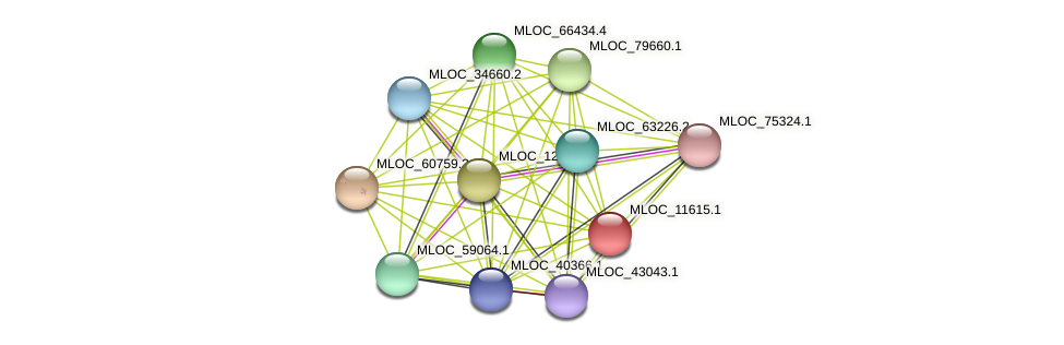MLOC_11615.1 protein (Hordeum vulgare) - STRING interaction network