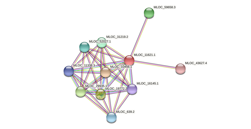 MLOC_11621.1 protein (Hordeum vulgare) - STRING interaction network