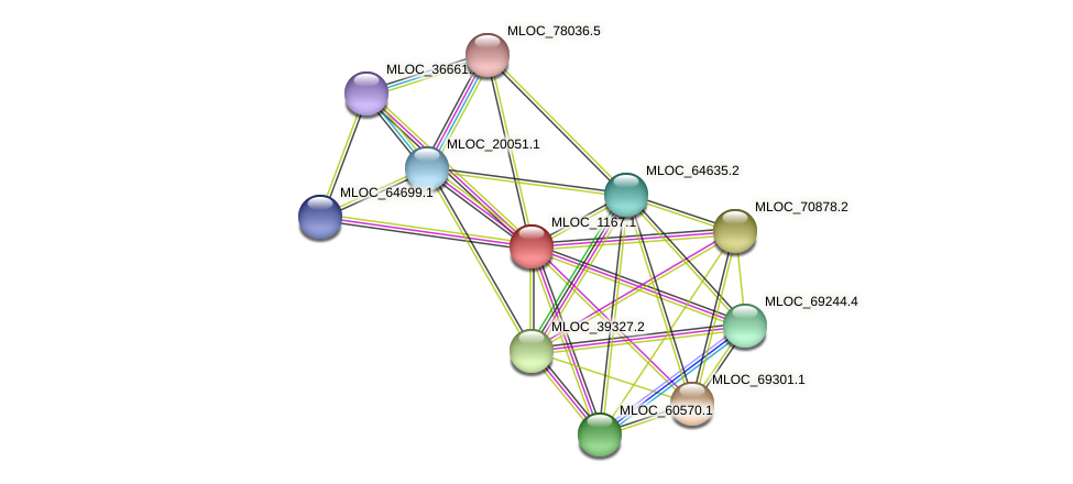 MLOC_1167.1 protein (Hordeum vulgare) - STRING interaction network