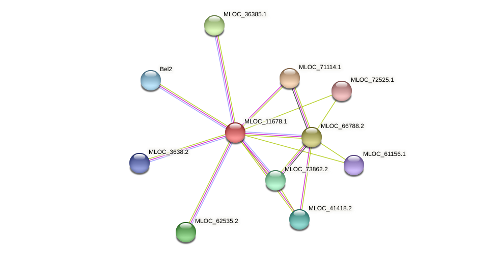MLOC_11678.1 protein (Hordeum vulgare) - STRING interaction network