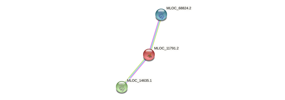 MLOC_11791.2 protein (Hordeum vulgare) - STRING interaction network