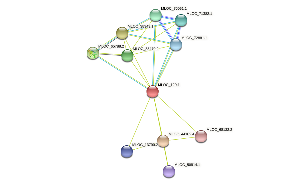 MLOC_120.1 protein (Hordeum vulgare) - STRING interaction network