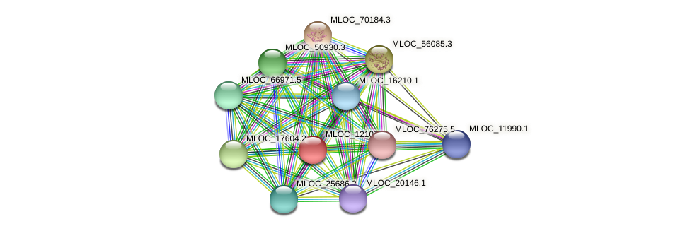 MLOC_12107.3 protein (Hordeum vulgare) - STRING interaction network
