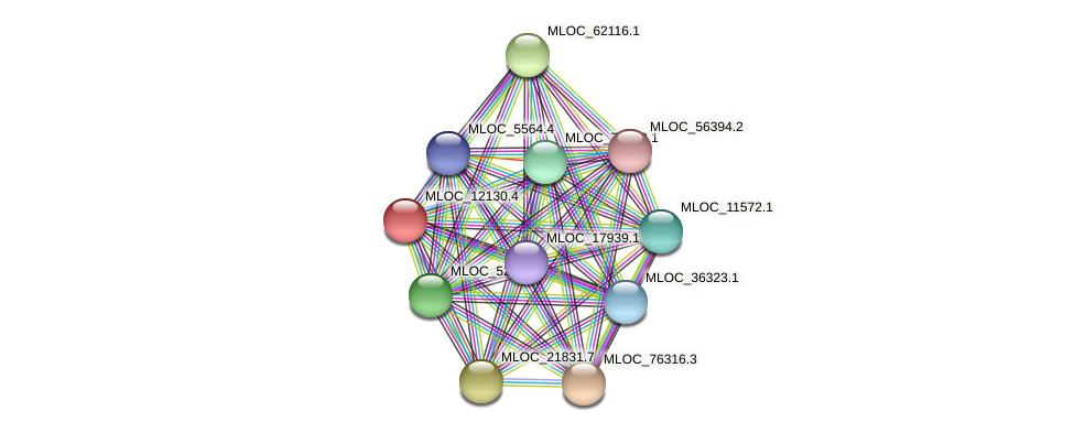 MLOC_12130.4 protein (Hordeum vulgare) - STRING interaction network