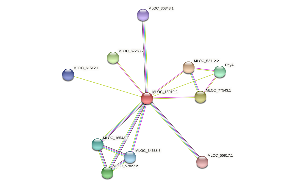 MLOC_13019.2 protein (Hordeum vulgare) - STRING interaction network