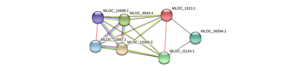 MLOC_1313.1 protein (Hordeum vulgare) - STRING interaction network