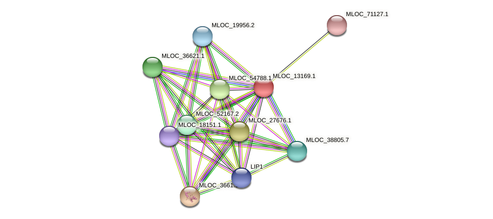 MLOC_13169.1 protein (Hordeum vulgare) - STRING interaction network