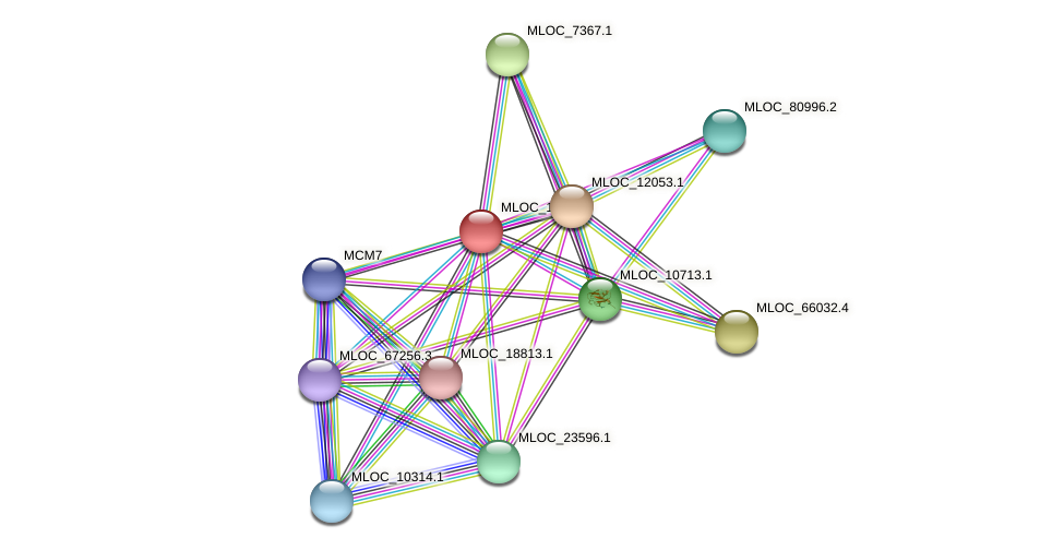 MLOC_13186.5 protein (Hordeum vulgare) - STRING interaction network