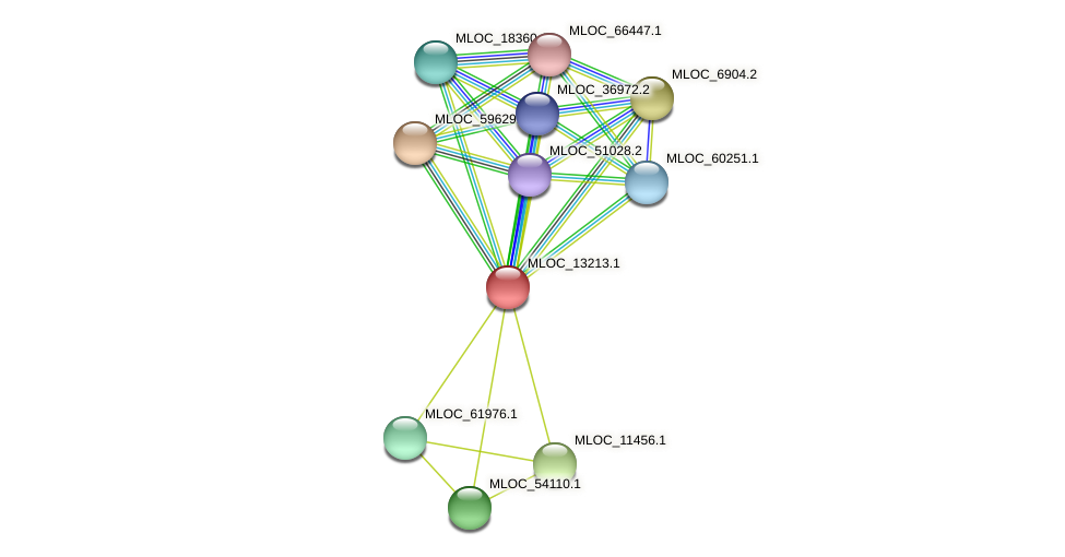 MLOC_13213.1 protein (Hordeum vulgare) - STRING interaction network