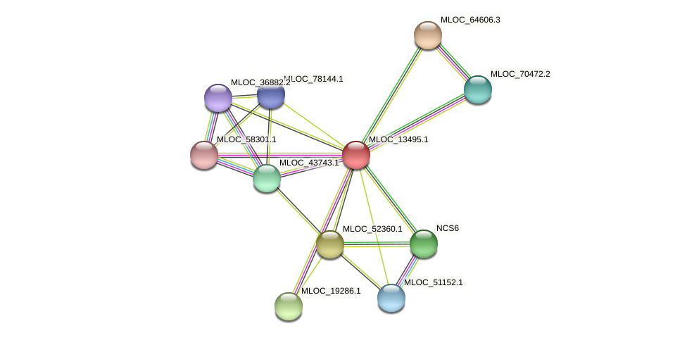 MLOC_13495.1 protein (Hordeum vulgare) - STRING interaction network