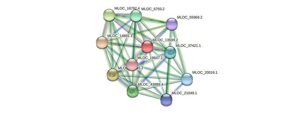 MLOC_13599.2 protein (Hordeum vulgare) - STRING interaction network