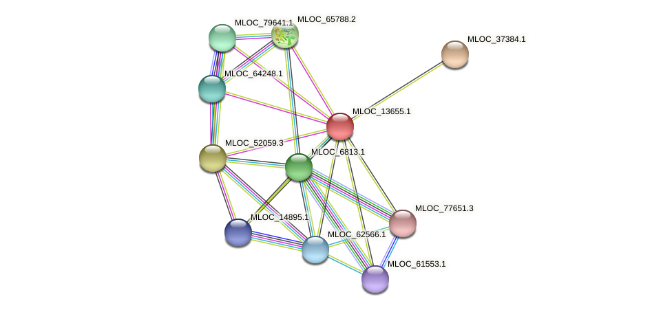 MLOC_13655.1 protein (Hordeum vulgare) - STRING interaction network