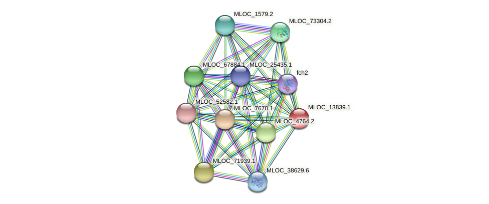 MLOC_13839.1 protein (Hordeum vulgare) - STRING interaction network