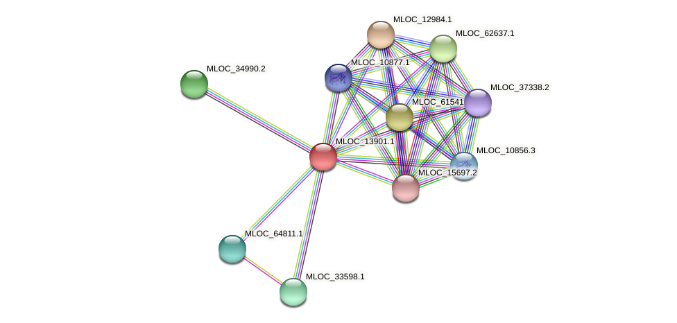 MLOC_13901.1 protein (Hordeum vulgare) - STRING interaction network