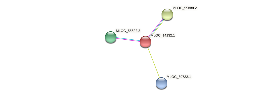 MLOC_14132.1 protein (Hordeum vulgare) - STRING interaction network