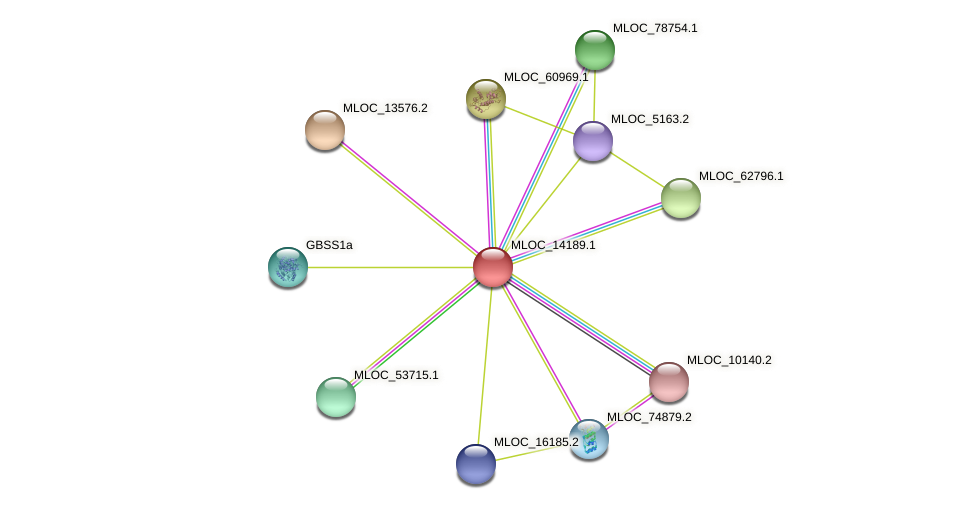 MLOC_14189.1 protein (Hordeum vulgare) - STRING interaction network