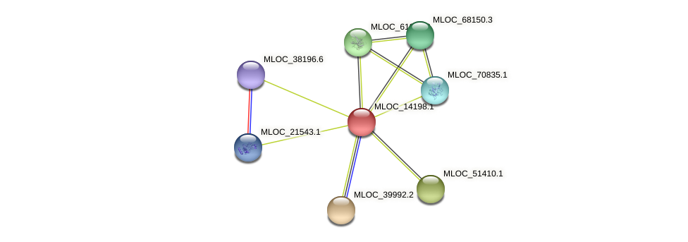 MLOC_14198.1 protein (Hordeum vulgare) - STRING interaction network