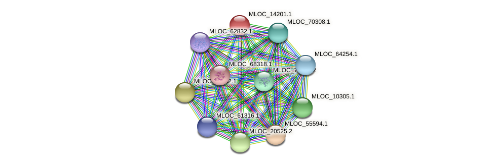 MLOC_14201.1 protein (Hordeum vulgare) - STRING interaction network