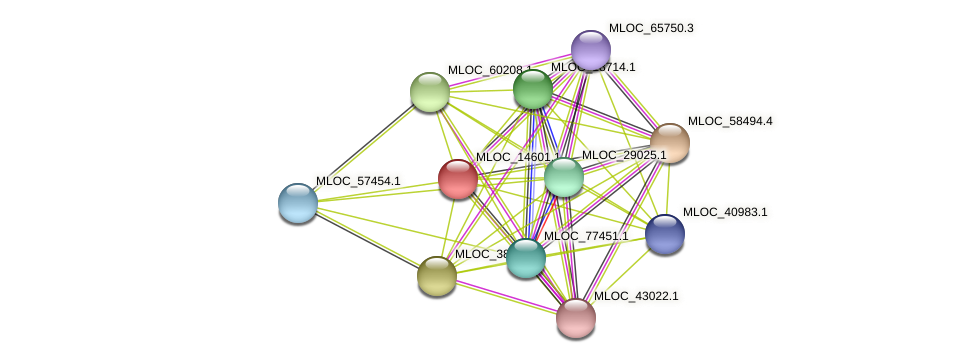 MLOC_14601.1 protein (Hordeum vulgare) - STRING interaction network