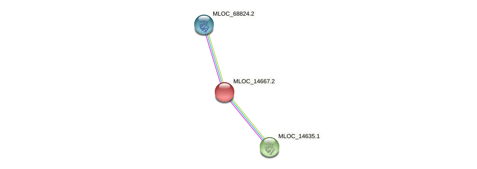 MLOC_14667.2 protein (Hordeum vulgare) - STRING interaction network