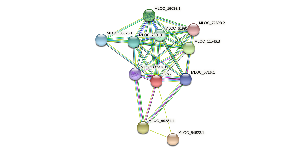 CKX7 protein (Hordeum vulgare) - STRING interaction network