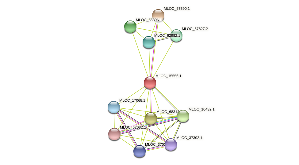 MLOC_15556.1 protein (Hordeum vulgare) - STRING interaction network