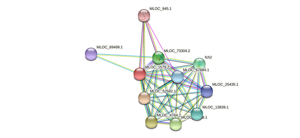 MLOC_1579.2 protein (Hordeum vulgare) - STRING interaction network