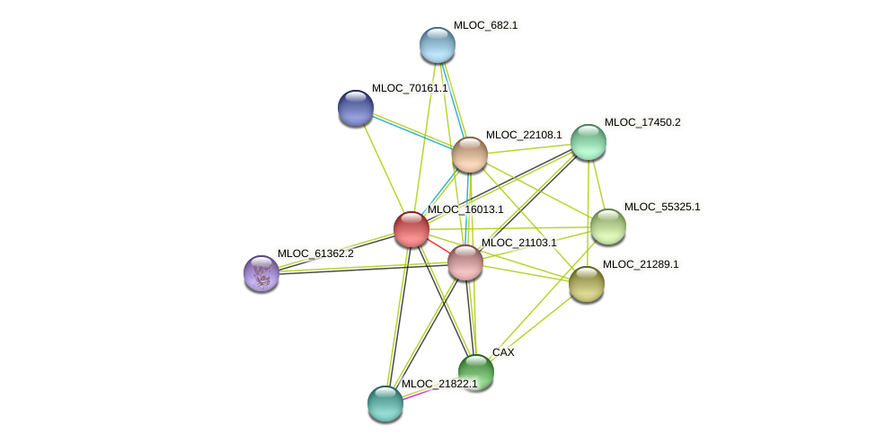 MLOC_16013.1 protein (Hordeum vulgare) - STRING interaction network