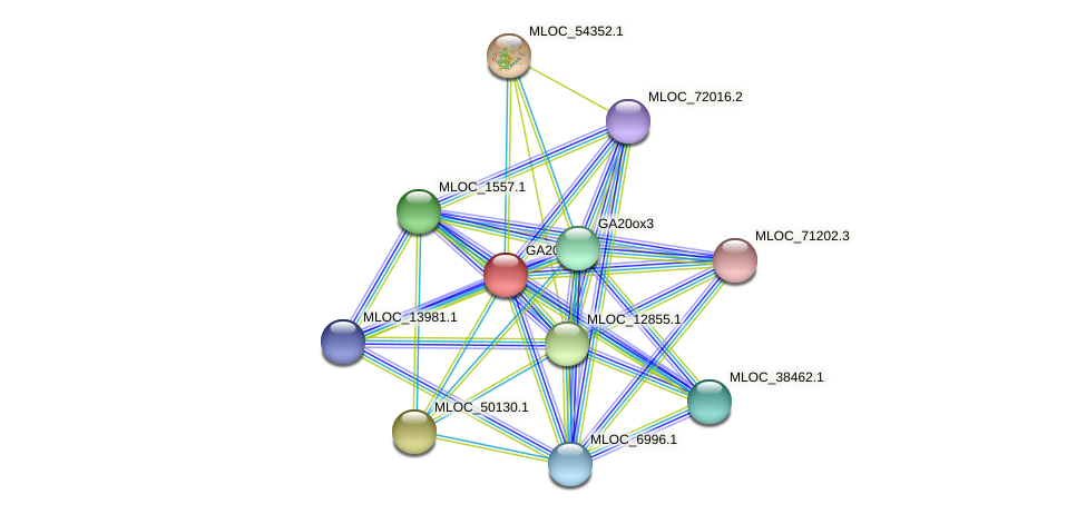 GA20ox1 protein (Hordeum vulgare) - STRING interaction network