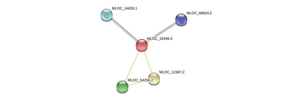 MLOC_16346.4 protein (Hordeum vulgare) - STRING interaction network