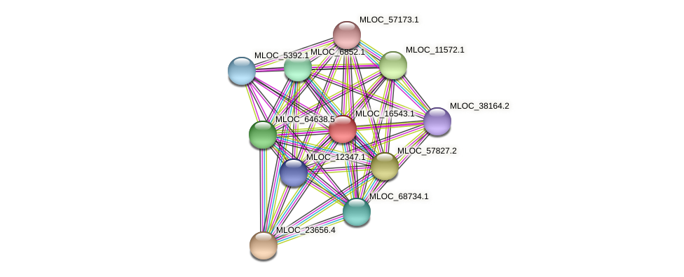 MLOC_16543.1 protein (Hordeum vulgare) - STRING interaction network