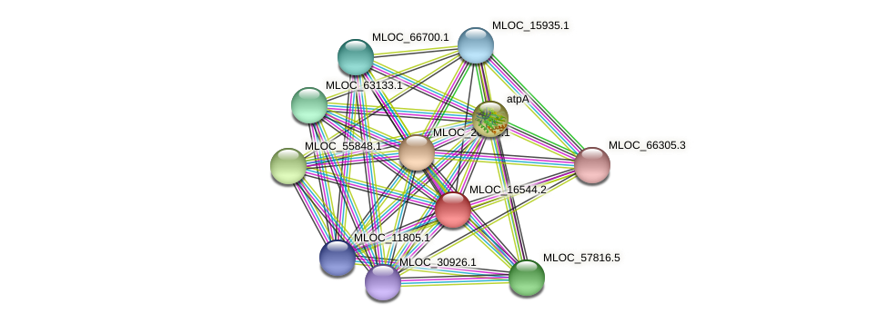 MLOC_16544.2 protein (Hordeum vulgare) - STRING interaction network