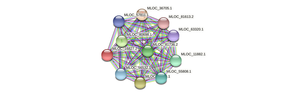 MLOC_16827.2 protein (Hordeum vulgare) - STRING interaction network