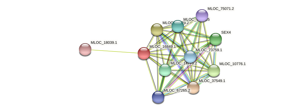MLOC_16849.1 protein (Hordeum vulgare) - STRING interaction network