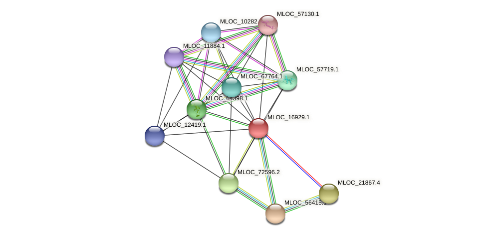 MLOC_16929.1 protein (Hordeum vulgare) - STRING interaction network