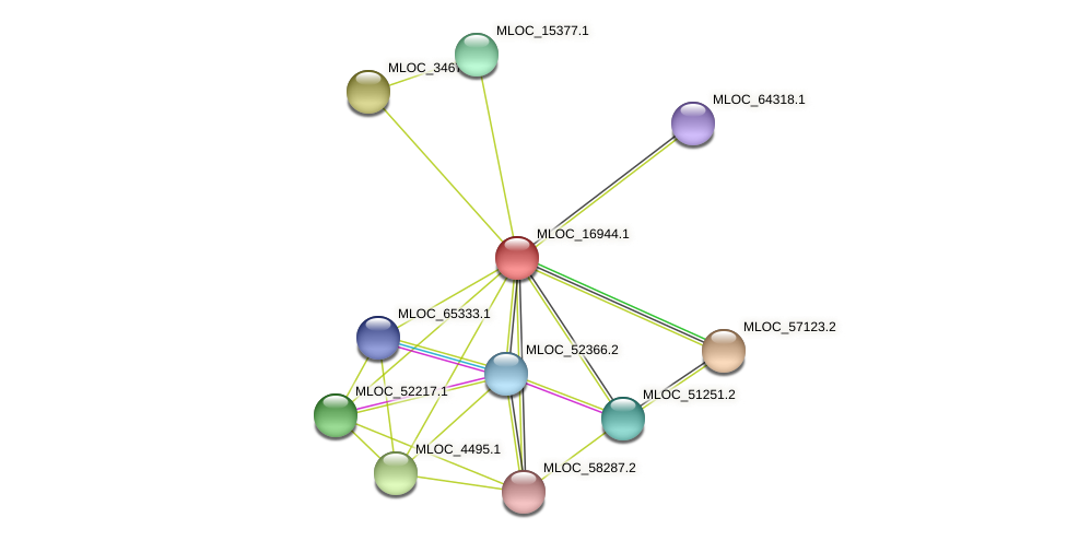 MLOC_16944.1 protein (Hordeum vulgare) - STRING interaction network