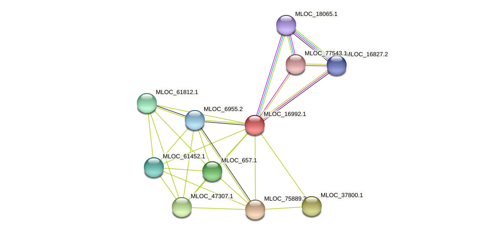 MLOC_16992.1 protein (Hordeum vulgare) - STRING interaction network