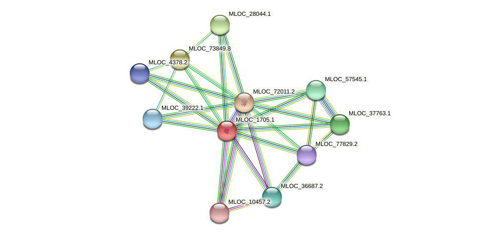 MLOC_1705.1 protein (Hordeum vulgare) - STRING interaction network