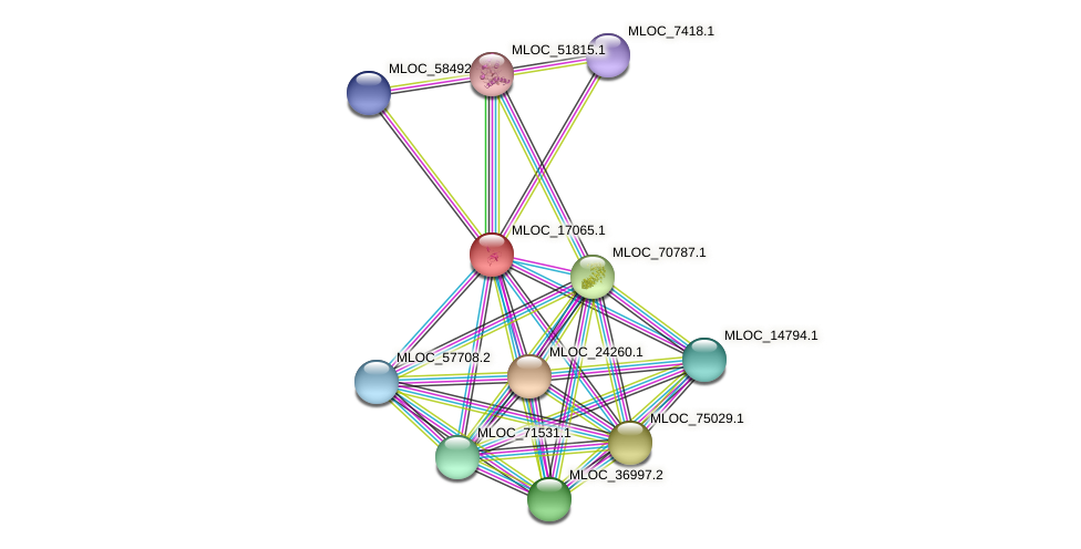 MLOC_17065.1 protein (Hordeum vulgare) - STRING interaction network