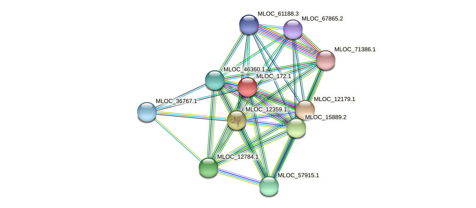 MLOC_172.1 protein (Hordeum vulgare) - STRING interaction network