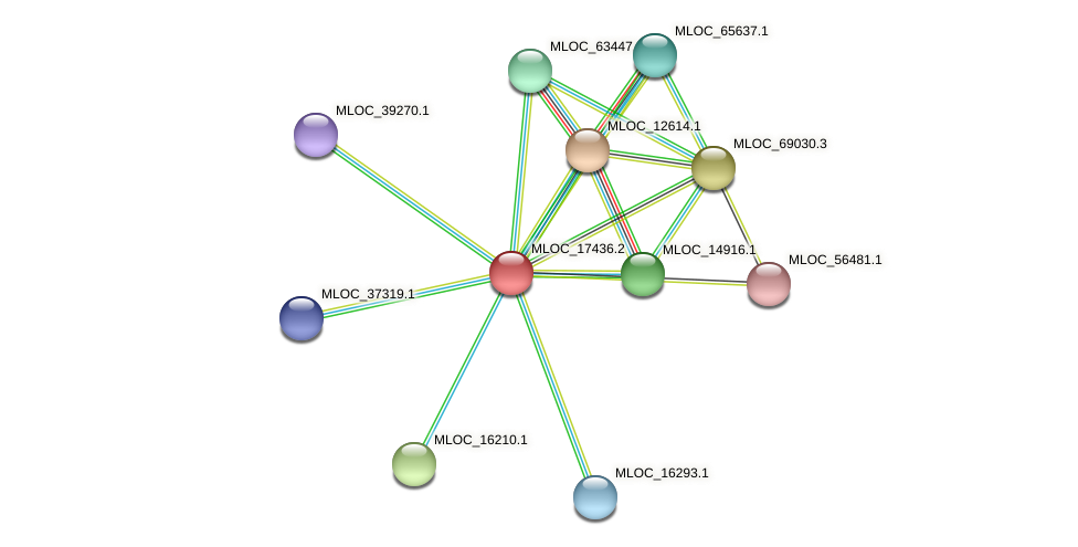 MLOC_17436.2 protein (Hordeum vulgare) - STRING interaction network