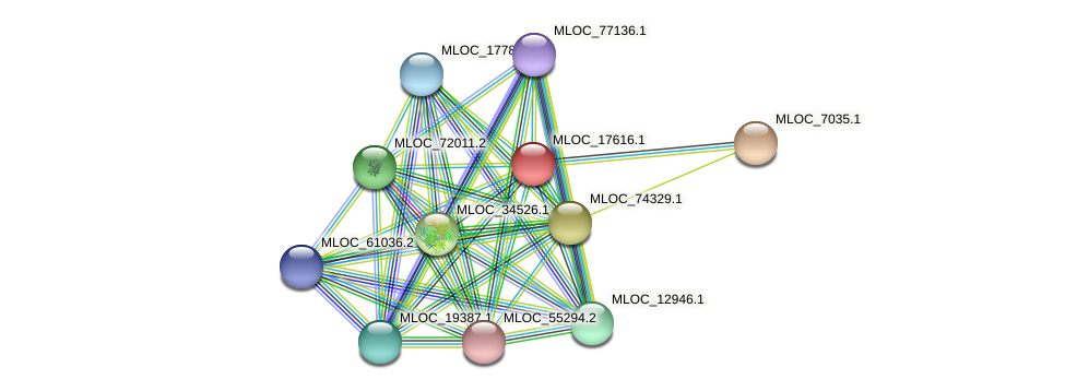MLOC_17616.1 protein (Hordeum vulgare) - STRING interaction network