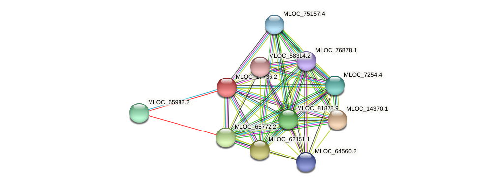 MLOC_17736.2 protein (Hordeum vulgare) - STRING interaction network