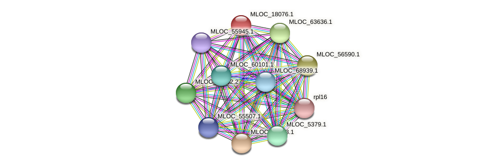 MLOC_18076.1 protein (Hordeum vulgare) - STRING interaction network